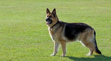 Dog Adoption Services Dallas TX