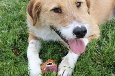 Dog Trainer in Dallas - Carrollton - Farmers Branch TX DogsPurpaws